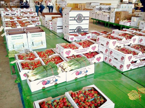 Save money shop at a produce auction photo- tips from Homemaker's Challenge @homechallenge