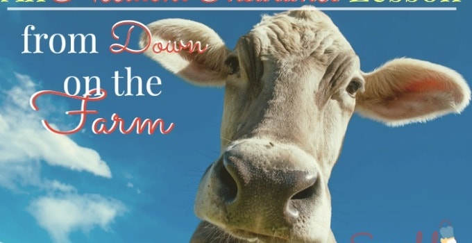 An Accident Insurance Lesson from Down on the Farm